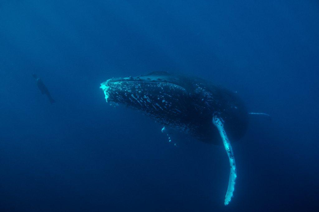 INSIDE gordobanks humpback whale and sea lion