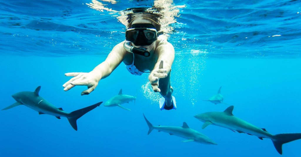 swimming with sharks in Mexico