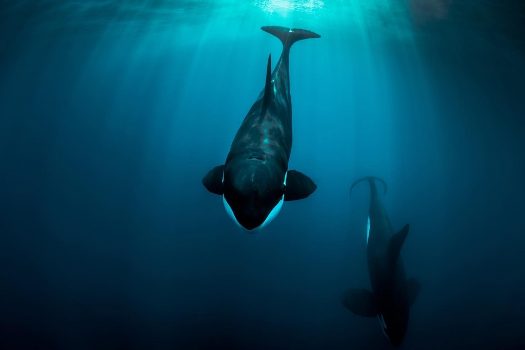 orca in baja california sur